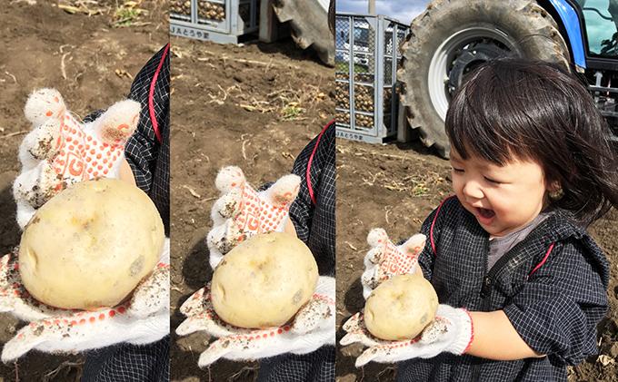 北海道洞爺湖町のふるさと納税 北海道洞爺湖町産 青野農園直送!旬の野菜2回お届け