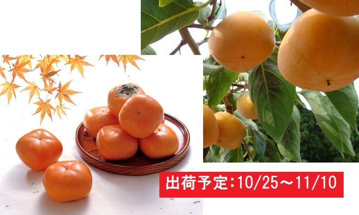 山形県庄内産「庄内柿」約7.5kg・秀L~2L
