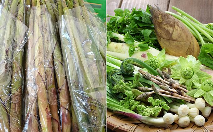 おすすめの返礼品 採れたて細竹500gと山菜セット(3~7品程度) 山形 朝日連峰