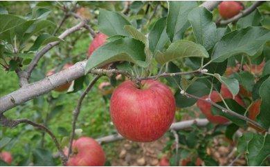 シナノスイート 約3kg(長野県認証 減農薬生産)