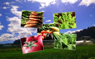 長野県佐久市のふるさと納税 【3ヶ月定期便】くさぶえ農園の季節の野菜セット