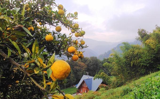 長野県天龍村のふるさと納税 無添加・手しぼり 100%ゆず果汁 2本セット