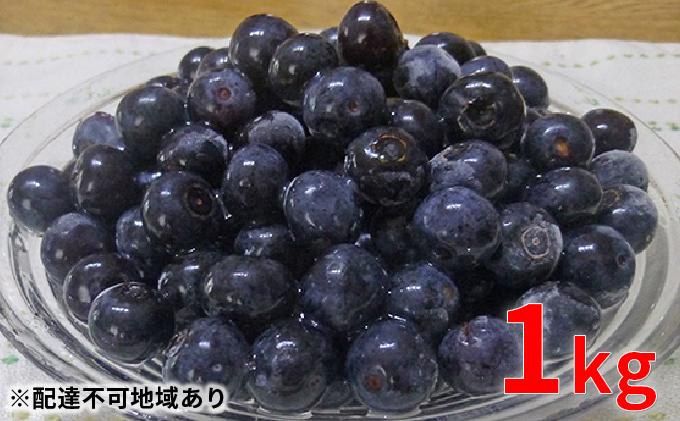 本日のおすすめ 木津川市産ブルーベリー