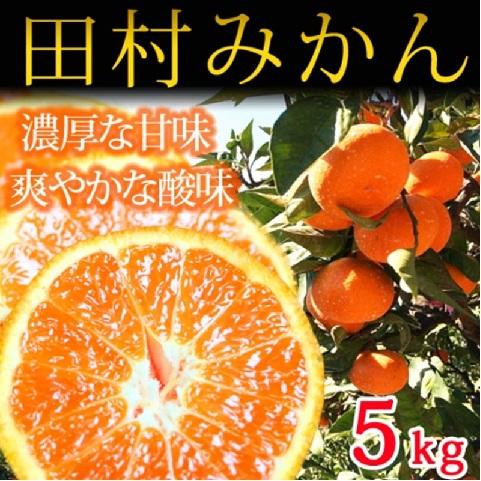 和歌山県湯浅町のふるさと納税 高級ブランド 田村みかん 5kg